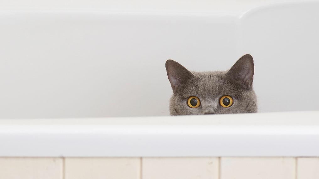 neuter cat