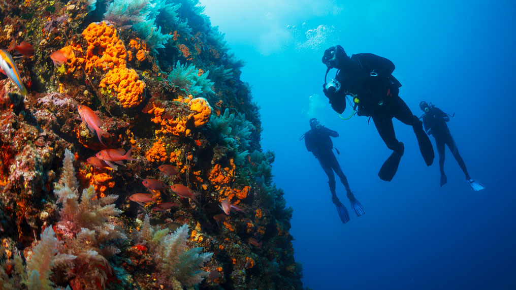 diving holiday
