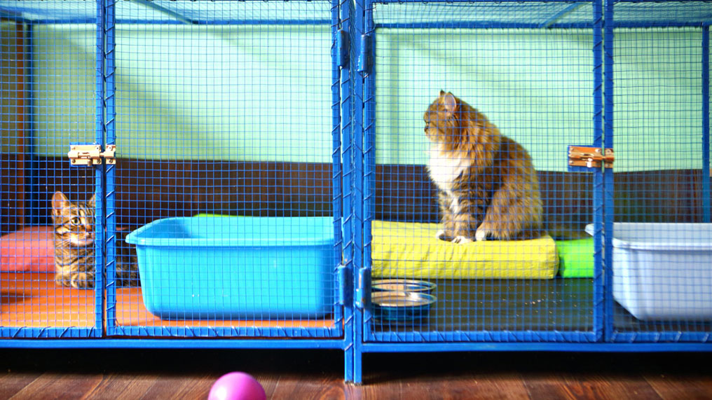 Two cats sit in their holiday homes.